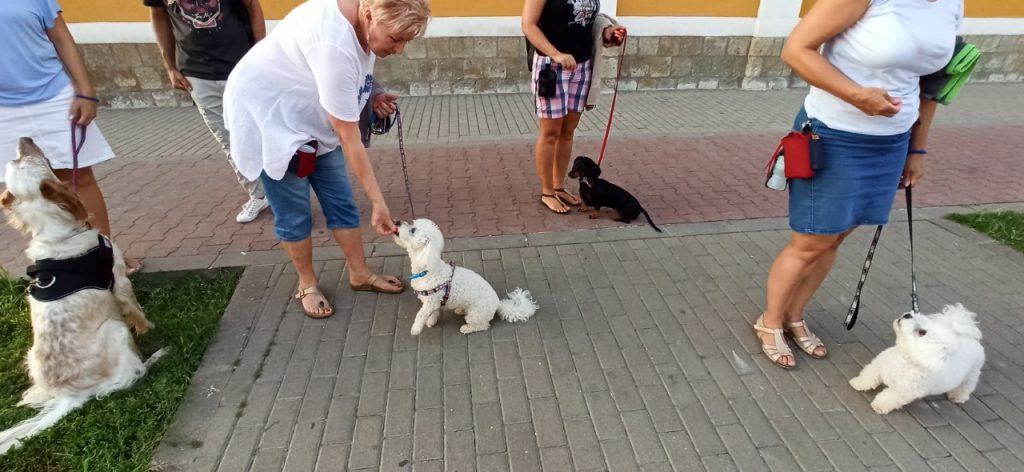 családi kutya kurzus
