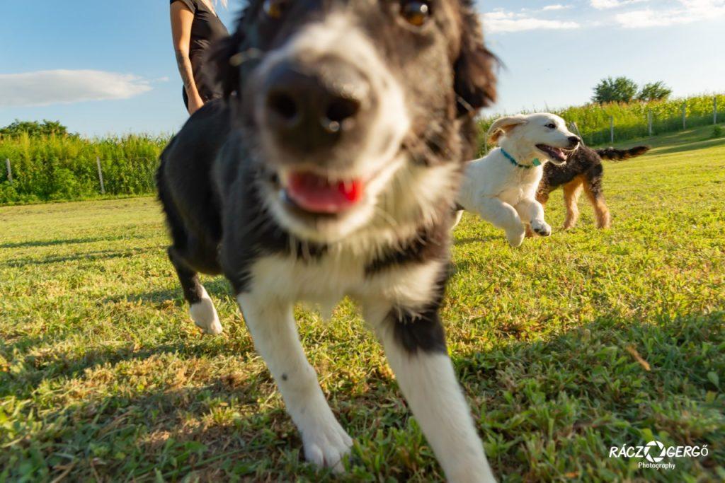 kutyapanzió - kölyökkutya